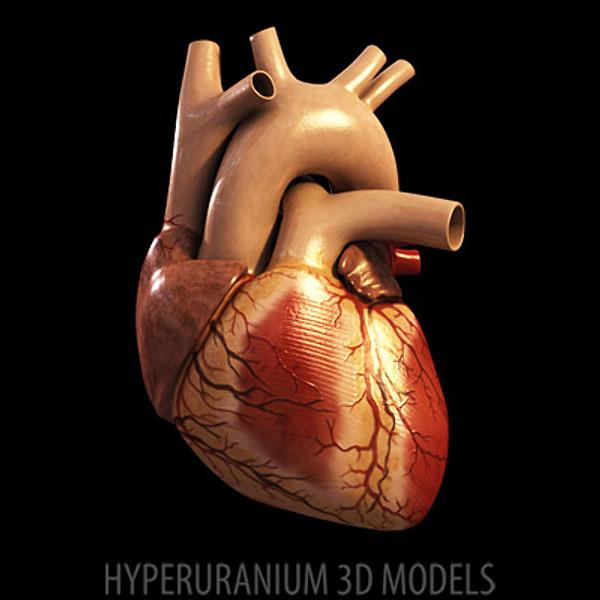 Πως λειτουργεί η Καρδιά